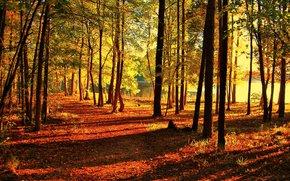 outono, parque, estrada, árvores, lagoa, paisagem
