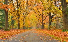trees, park, road, landscape, autumn