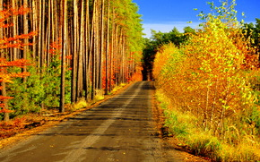 forest, trees, road, landscape, autumn