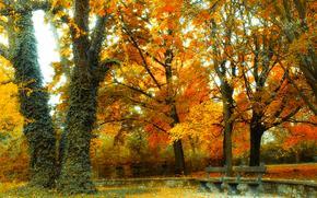 фотокартина, печать на холсте на заказ Украина ArtHolst парк, осень, деревья, лавочки, пейзаж