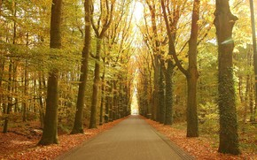 дорога, парк, деревья, пейзаж, осень