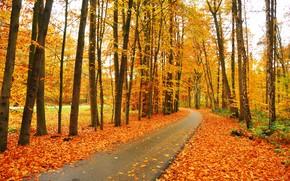 фотокартина, печать на холсте на заказ Украина ArtHolst осень, парк, деревья, дорога, пейзаж