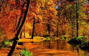 деревья, лес, пруд, пейзаж, осень