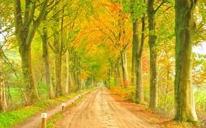 пейзаж, дорога, деревья, осень