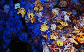 autunno, fogliame, pozzanghera, natura
