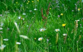 макро, трава, цветы, поле