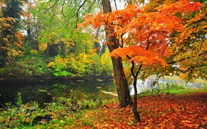 pond, trees, park, landscape, autumn