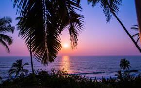 sunset, sea, India, Palms, Sunset in Goa, landscape