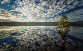 pine, tree, water, island, bay, sky, clouds, reflection