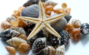 ракушки, морская звезда, макро
