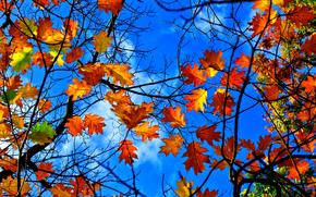 фотокартина, печать на холсте на заказ Украина ArtHolst осень, небо, ветки, листья, природа