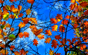 BRANCH, foliage, sky, nature, autumn