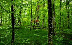 фотокартина, печать на холсте на заказ Украина ArtHolst лес, деревья, природа