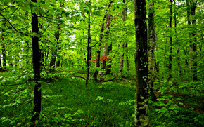 nature, trees, forest