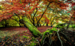autumn, trees, forest, nature
