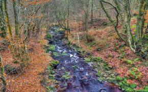деревья, река, лес, природа, осень