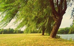 râu, peisaj, copaci, domeniu