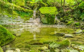 森, 木, 岩, 自然
