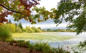 деревья, пейзаж, озеро, осень