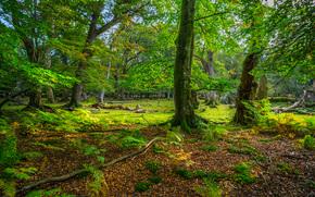 деревья, пейзаж, парк, осень
