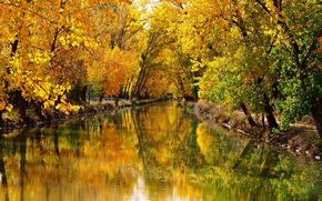 automne, canal, arbres, paysage