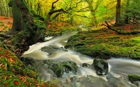 river, trees, forest, nature, autumn