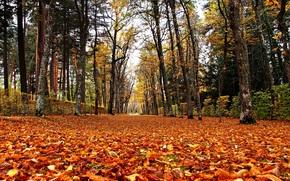 秋, 公园, 树, 道路, 景观