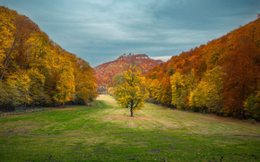 trees, Mountains, field, landscape, autumn