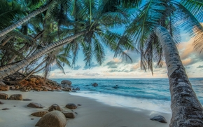 Palms, costa, mar, pedras, Seychelles, paisagem