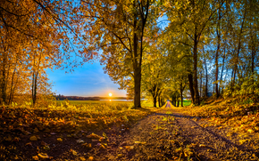 forest, road, sunset, trees, autumn, landscape