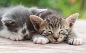 Gatitos, pareja, recreación, sueño