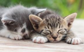 сон, парочка, отдых, котята