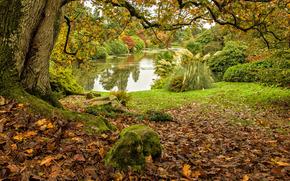 Middle Lake, Sheffield Park, lac, automne, arbres, paysage