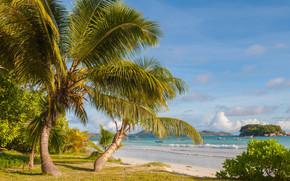 Seychelles, Palme, mare, puntellare, paesaggio