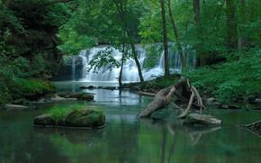 foresta, fiume, cascata, alberi, natura