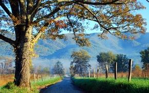 carretera, árboles, Montañas, Hills, campo, paisaje