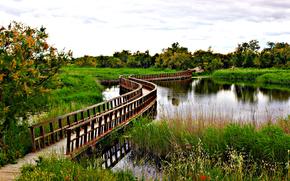 rivière, pont, automne, arbres, paysage