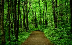森林, 道路, 树, 性质