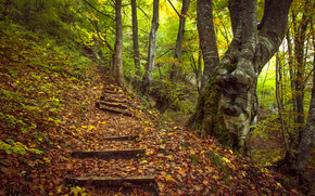 autumn, forest, hill, stage, trees, landscape