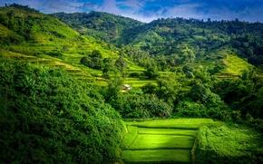 Montagne, alberi, Terrazze di riso, paesaggio