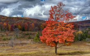 осень, поле, деревья, пейзаж