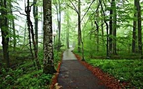 forêt, parc, route, arbres, paysage