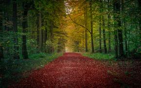 automne, forêt, route, arbres, paysage