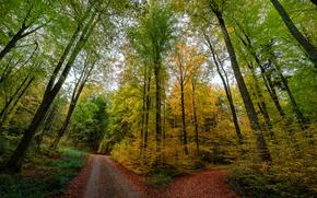 autunno, foresta, stradale, forcella, alberi, paesaggio