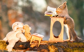 squirrel, teacher, students, stuffed animals, Teddy Bear, school, log