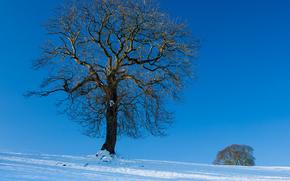 hiver, arbre solitaire, paysage