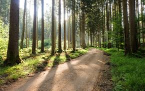 bosque, árboles, carretera, paisaje