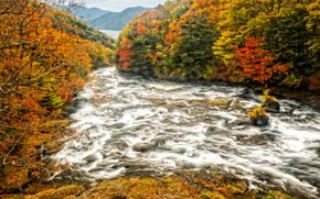 autumn, river, trees, landscape