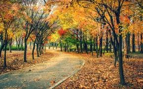 秋, 公园, 道路, 树, 景观