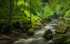 foresta, fiume, alberi, paesaggio